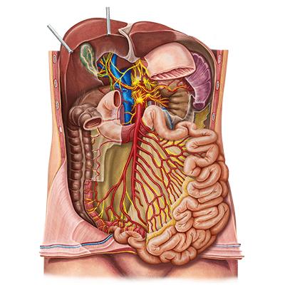 belünk a masodik agyunk vigyázz rá colon-hirdoterápiával